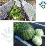 Sacchetto non tessuto di protezione dell'impianto del giardino del tessuto dei pp/prodotto non intessuto di agricoltura/Landscape/TNT