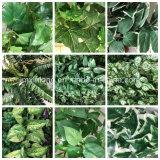 Decoração de jardim planta artificial Nephthytis deixa