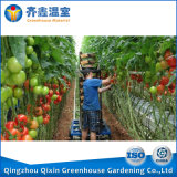 Invernadero de China para el invernadero de la película del invernadero de la agricultura de los verdes