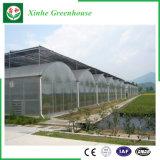 Agricoltura della serra di plastica per gli ortaggi/fiori