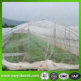 채소밭을%s 반대로 비행거리 곤충 그물을 그물로 잡는 온실
