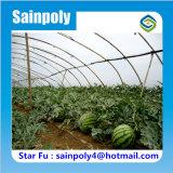 De landbouw Gebruikte Serre van de Tunnel voor Watermeloen