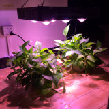 El poder real de 250W de luz LED de la COB crecer