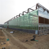 Factory Supply Venlo Glass Greenhouse with Hydroponic System clouded