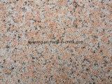 De goedkope G562 Tegel van het Graniet van de Esdoorn Rode met struik-Gehamerde Oppervlakte