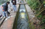 8kw 댐 쉬운 임명 뜨 운하 물 터빈 없음
