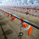 Высокое качество автоматического кормления птицы и Dinking системы на куриное мясо