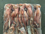 Ilex congelados de la cabeza de calamar a la venta