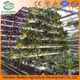 Sistemi commerciali di coltura idroponica che piantano la coltura Soilless della gomma piuma
