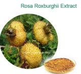 100% natürlicher Rosa Roxburghii Auszug, Saft-Puder Rosa-Roxburghii, Cili Puder