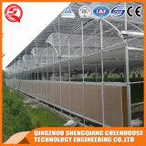 농업 직류 전기를 통한 강철 관 많은 아치 온실