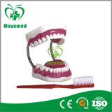 Mi-N103 extraíble de goma suave Dental 28pcs modelo de atención de los dientes