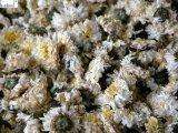 Chrysantheme-Blume