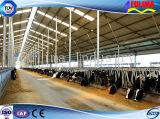 Сильный Headlock коровы/скотин с гальванизированной стальной трубой (SSW-H-001)