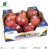 Cadres de empaquetage de papier pour les fruits et légumes (Fp901455)