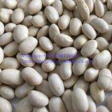 正方形の形の新しい穀物の白い腎臓豆