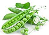 Erbsen-Protein der Eigenmarken-2lbs Unflavor für Vegan-Puder