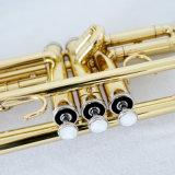 Goldene Lackbb-Ton-Trompete für Verkauf Brasswind Instrument