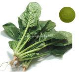 工場直接供給の緑のほうれんそうの粉かほうれんそうのエキスの5:1 ~20: 1