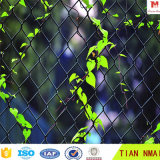 Ячеистая сеть звена цепи зеленого цвета травы
