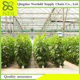 Serre chaude hydroponique agricole de qualité