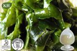 Qualidade superior de Fucoidan, Extrato de alga marrom