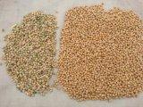 Classificador da cor do RGB para grãos-de-bico de Kabuli