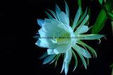 Greensource, film de transfert thermique pour des fleurs