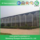 Multi-Überspannung Stahlrahmen-Aluminiumprofil PC Blatt-Gewächshaus für Frucht