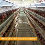 Modèle de Chambre de cage/ferme avicole de poulet d'oeufs de couche