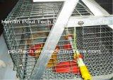 La poulette cultivant le matériel automatique de cages de cages chaud/froid a plongé galvanisé (un type le bâti)