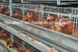 Cage de couche de batterie de machines de ferme de poulet avec alimenter automatique