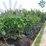 stuoia non tessuta biodegradabile di controllo pp Weed di 17~70G/M2 Weed