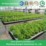La vendita calda coltiva la serra della strumentazione di coltura idroponica della casella