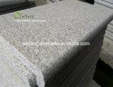 Pietra per cimasa e lastricatori della piscina Bullnose antiscorrimento del bordo del granito di Grey d'argento G603