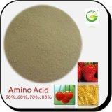 De origem vegetal ou animal 80% Aminoácidos livres