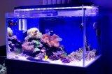 indicatore luminoso di 40cm 18*3W Blue+White LED per l'acquario