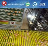 4 niveles jaula de la capa de pollo de granja