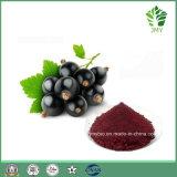 Естественная выдержка Elderberry дополнения еды, антоцианин 5%-25%