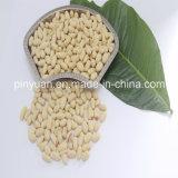 Консигнант отбеленного стерженя арахиса/Groundnut