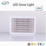 完全なスペクトル300W LEDは屋内耕作のために軽く育つ