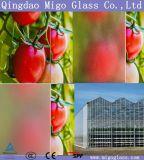 Greenhouse verre Fabricant, 4mm Verre trempé à effet de serre