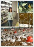 Rede de arame hexagonal de 40 * 40mm * 0.8mm para cerca de fazenda