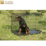 Cassa piegante del cane del metallo con il doppio portello