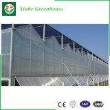 La estructura de acero galvanizado cubierta de la hoja de PC invernaderos comerciales usa