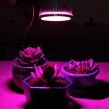 LEDはクリップ適用範囲が広いランプと軽く育つ