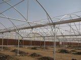Multi-span agricoles pour la tomate de serre hydroponique de film