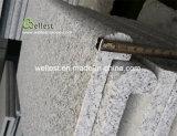 De zilveren Grijze G603 Het hoofd biedende Steen en de Betonmolens van het Zwembad van de Rand Bullnose van het Graniet Antislip