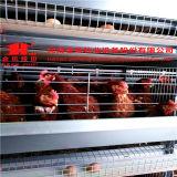 H tapent aux oiseaux automatiques de poulet de couche des cages de volaille avec le meilleur prix