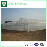 De Serre van de landbouw en de Serre van de Tuin voor Groente